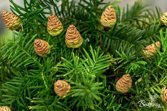Ceramic flower: Pine Cone